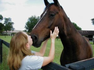 Affectionate horsee